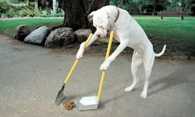 cani che sporcano